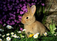 Wallpapers Animals Rabbit Among Flowers