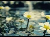 Fonds d'écran Nature Effleurer l'eau...
