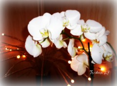 Wallpapers Nature Orchidées...