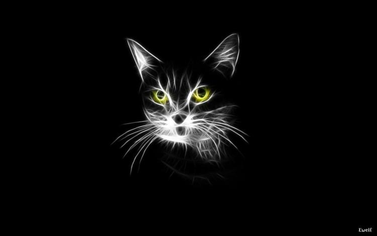 Fonds d 39 cran animaux fonds d 39 cran chats chatons chat for Fond ecran sombre