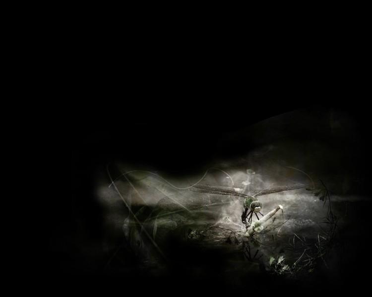Fonds d'écran Art - Numérique Animaux libellule