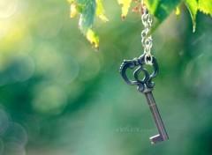 Fonds d'écran Nature L'arbre et la clé