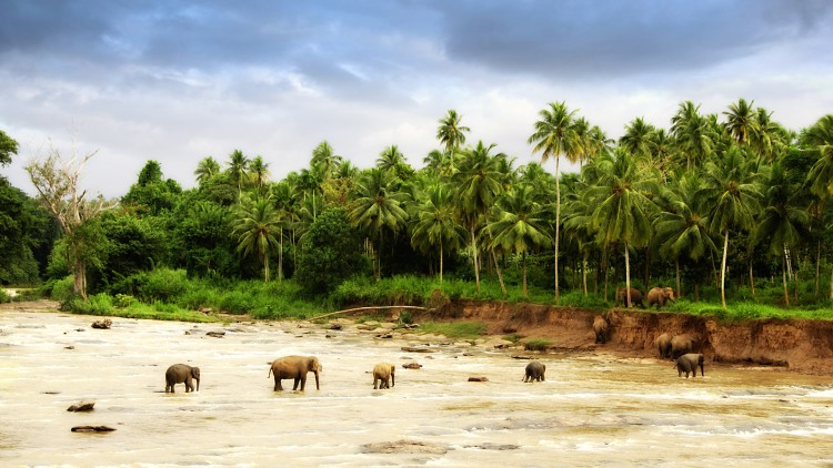 Fonds d'écran Voyages : Asie Inde Traversée