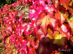 Wallpapers Nature Mur d'Automne...