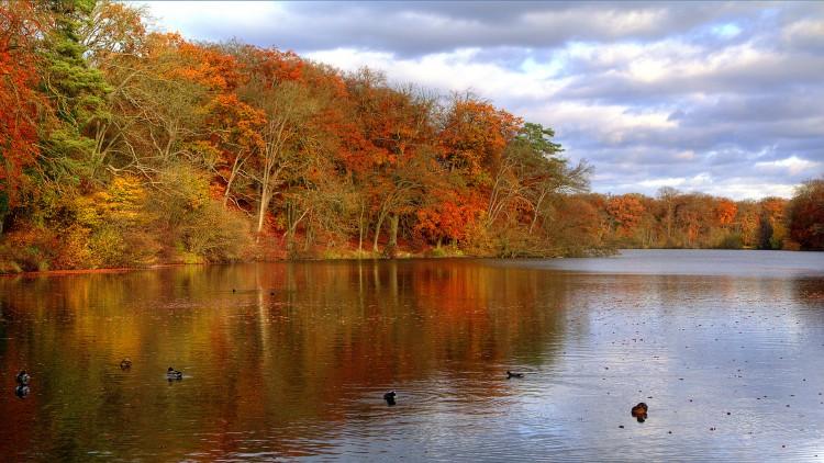 Fonds d'écran Nature Saisons - Automne Couleurs d'automne - 2