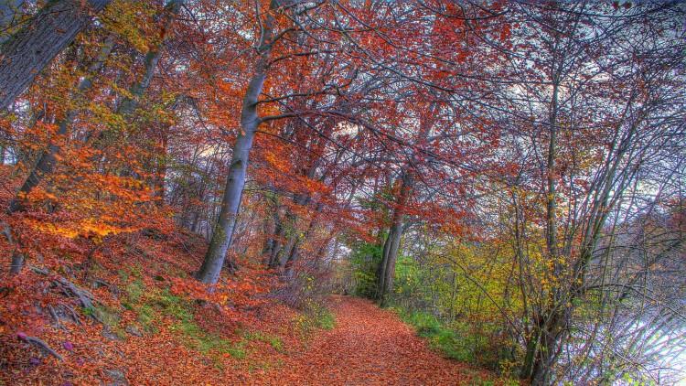 Fonds d'écran Nature Saisons - Automne Sentier d'automne - 2