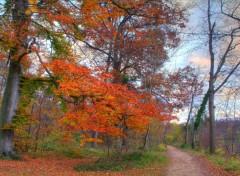 Fonds d'écran Nature Sentier d'automne - 1