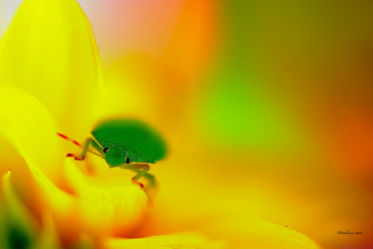 Fonds d'écran Animaux Insectes - Divers Early Morning Pleasures