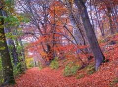 Fonds d'écran Nature Sentier d'automne - 3