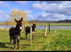 Fonds d'écran Animaux ânes âne dans la nature ...