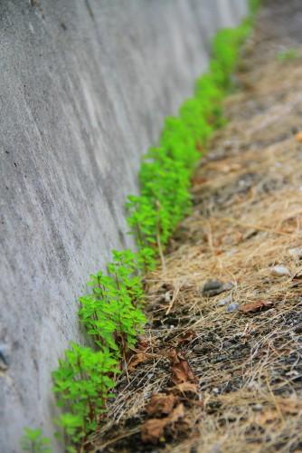 Fonds d'écran Nature Herbes Mauvaises herbes