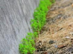Fonds d'écran Nature Mauvaises herbes