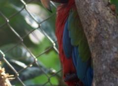 Fonds d'écran Animaux Perroquet timide