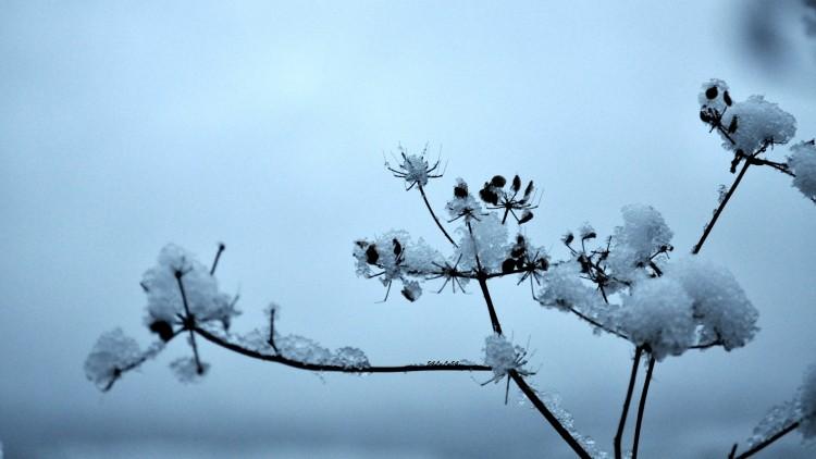 Wallpapers Nature Saisons - Winter PREMIERES NEIGES ...