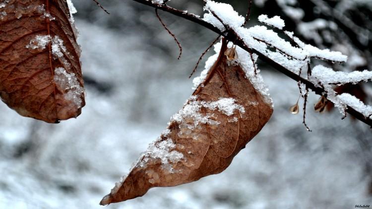 Wallpapers Nature Saisons - Winter Wallpaper N°272522