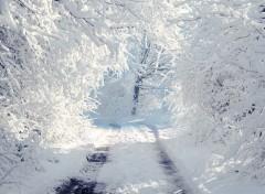 Fonds d'écran Nature Chemin de neige.