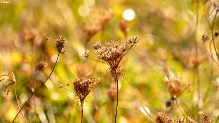 Fonds d'écran Nature Fleurs UN PETIT AIR DE PRINTEMPS EN PLEIN HIVER ...
