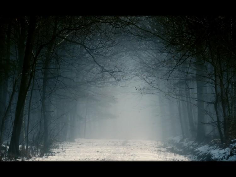 Fonds d'écran Nature Arbres - Forêts Chemin de brume