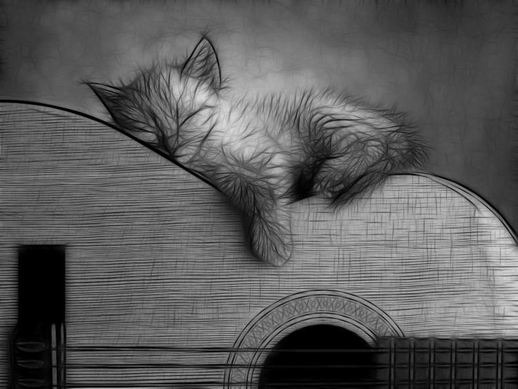 Fonds d'écran Animaux Chats - Chatons Chaton Guitariste