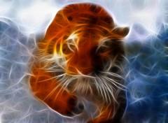 Fonds d'écran Animaux Tigre qui surgit de l'eau