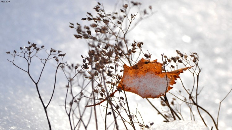 Fonds d'écran Nature Saisons - Hiver Wallpaper N°273705