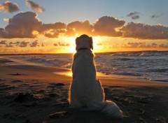 Fonds d'écran Animaux Le coucher de soleil
