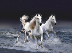 Wallpapers Animals Chevaux