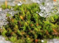 Fonds d'écran Nature Mousse gelée