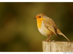 Wallpapers Animals Rouge-George .1
