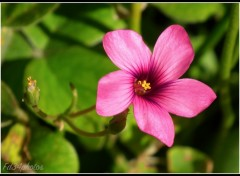 Wallpapers Nature Petite Fleur..