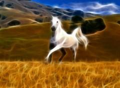 Fonds d'écran Animaux Le petit cheval dans la prairie