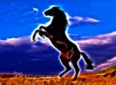 Fonds d'écran Animaux Cheval noir cabré