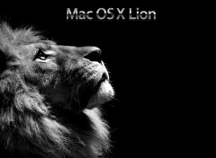 Fonds d'écran Informatique Mac OS X Lion