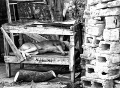 Fonds d'écran Animaux Chien qui dort