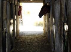 Fonds d'écran Animaux chevaux