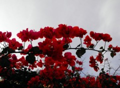 Wallpapers Nature fleur rouge et ciel