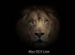 Fonds d'�cran Informatique Mac OS X Lion