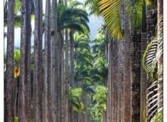 Fonds d'écran Voyages : Amérique du sud