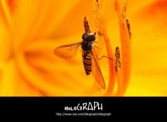 Fonds d'écran Animaux Insectes