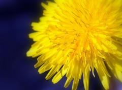Wallpapers Nature fleur soleil