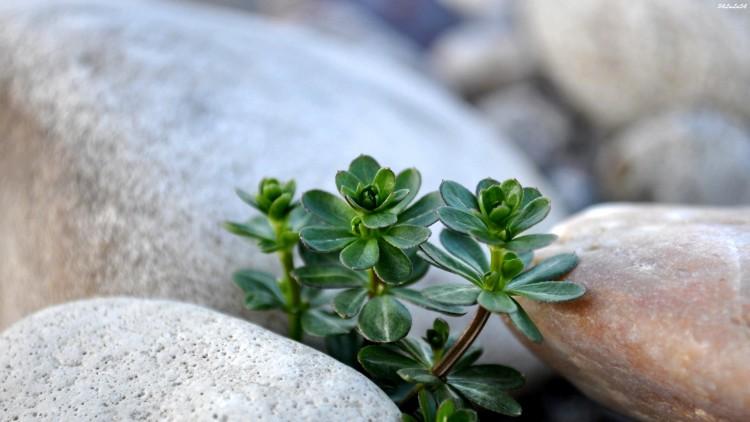 Fonds d'écran Nature Plantes - Arbustes Wallpaper N°277710