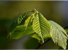 Fonds d'écran Nature Frühling
