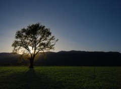 Fonds d'écran Nature Sunset on the tree