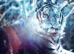 Fonds d'écran Animaux un tigre
