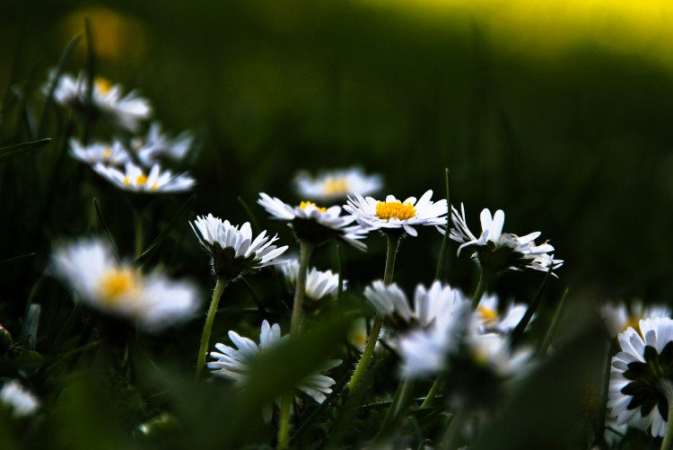 Fonds d'écran Nature Fleurs Wallpaper N°278865