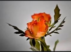 Fonds d'écran Nature fleures