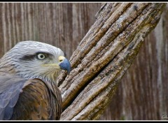 Wallpapers Animals Un aigle