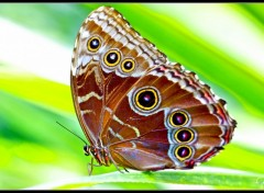 Wallpapers Animals Papillons1