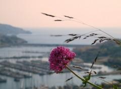 Fonds d'écran Nature fleur sur belle vue