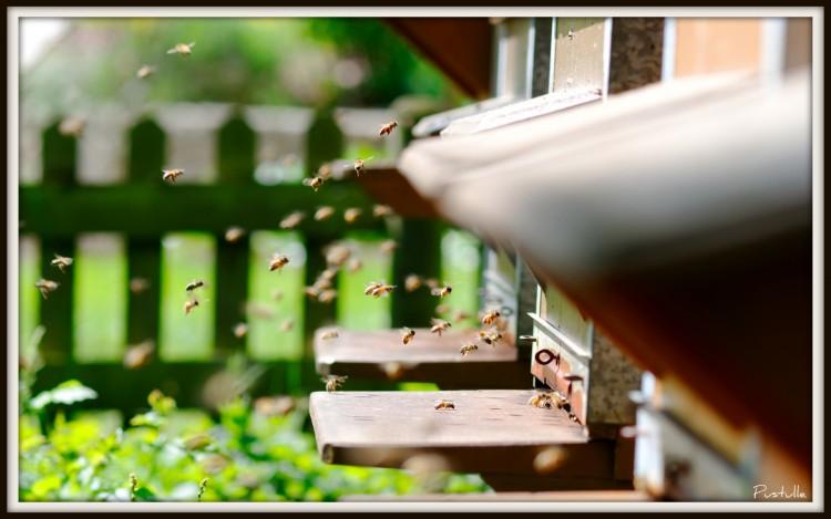 Fonds d'écran Animaux Insectes - Abeilles Guêpes ... Trafic aérien